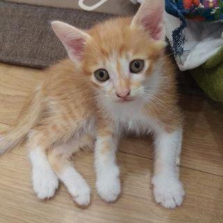 1ヶ月半の仔猫