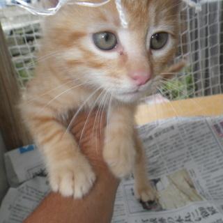 6月2日捨て猫か親にはぐれたか不明で我が家にやってきました。