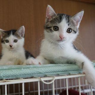生後2ヵ月、かわいい丸顔姉妹、一緒にお願いします