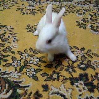 【お話し中】ウサギの里親さん、募集します☆