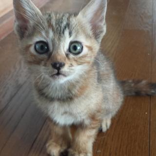 里親募集:親猫1匹とその子3匹です