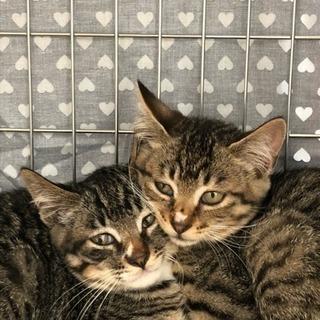 超ラッキーな子猫たち、里親さん募集です