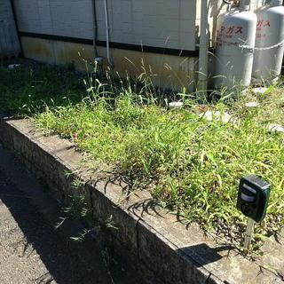 庭の草むしりをやっていただける方を1名募集します。