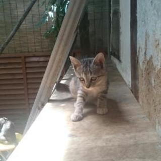 居座り子猫