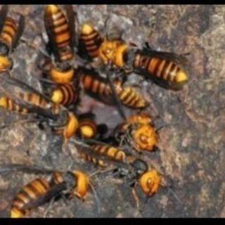 蜂駆除致します!🐝🐝🐝