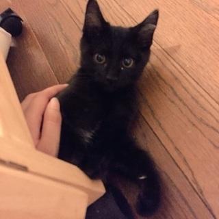 小さな黒猫ちゃん(オス)