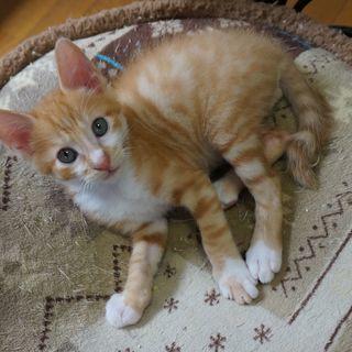 生後2ヵ月 人懐こくて、かわいい男の子 兄弟猫と一緒に、良いご縁...