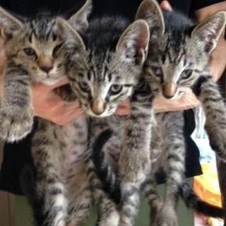 甘えん坊の仔猫達と愛情たっぷりのお母さん猫