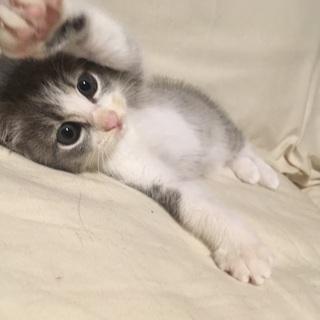 (トライアル決定!!!)毛長め(?)、垂れ目のツンデレ女の子(3ヶ月位) − 長崎県