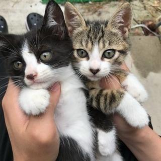 生後約2か月の子猫2匹