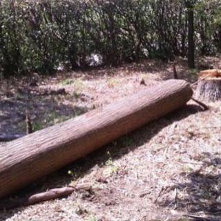 足利近辺の伐採木、雑木等処分にお困りの方、引き取ります。