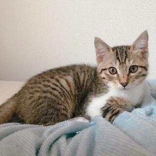 急募‼︎最後3ヶ月の子猫の里親さん!
