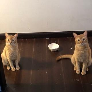 成猫3匹里親様探しております。