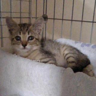 保護犬猫のフードやシーツをご寄付下さい🙏