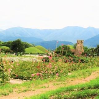 韓国南部、世界遺産を回り、ローカル列車の旅を語りませんか?