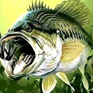 ルアー釣りやっている方!