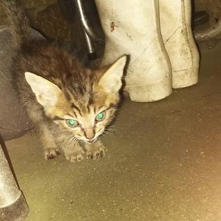 自宅に迷い込んだ子猫の里親を募集いたします