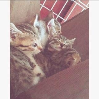 生後1ヶ月の子猫の里親を探しています