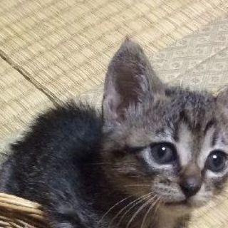 仔猫ちゃん達の里親さん 決まりました。有り難うございました。