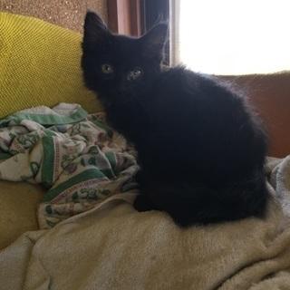 山口県から来た洋猫ミックスの兄弟。
