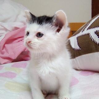 白黒子猫 生後30日前後 美猫さん
