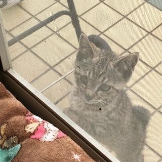 急募 子猫の里親募集
