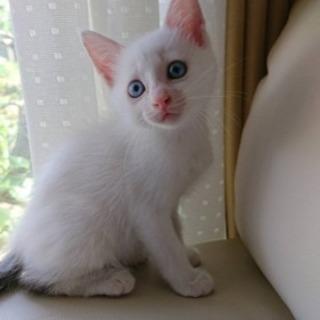 生後1ヶ月ちょっとの子猫です。