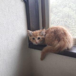 家の他猫とも慣れ、遊べるようになりました。