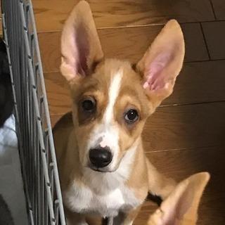 緊急募集 とても優しい3ヶ月 男の子 mix犬