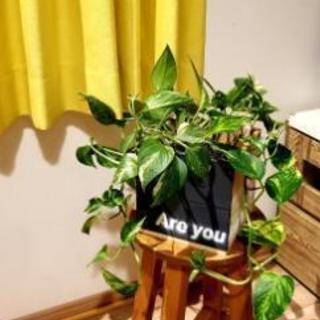 観葉植物鉢カバー