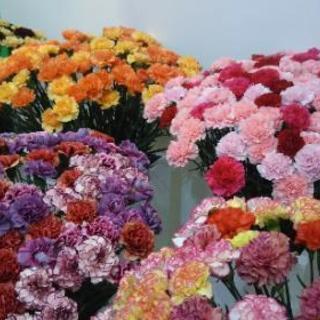 急募!【短期】切り花の仕分け・梱包作業