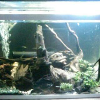 水槽60cmセット オマケ有 金魚 熱帯魚 プレコ グッピー 水草