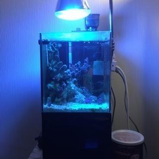 ミニ海水水槽セット