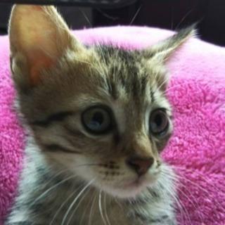 保護した生後2.5ヶ月の子猫