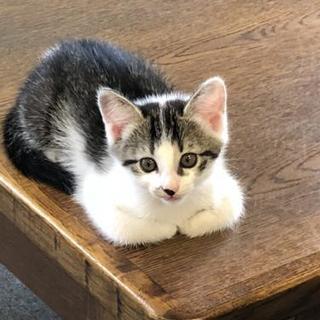 5月21日生まれの仔猫2匹 里親募集