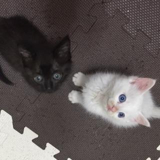 元気な2匹の子猫ちゃん♩