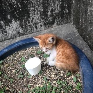 野良子猫さん里親様募集です。