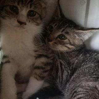 子猫の里親募集2 行き場がないので助けてください