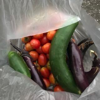 安心 安全な野菜の販売を開始します。