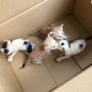 子猫  3匹オス 1匹メス