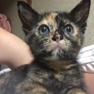 子猫/メス♀/愛媛