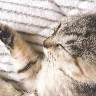 元気で甘えん坊な子猫(1ヶ月ちょっと)