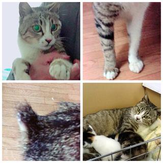 猫の里親募集 (仮名:母猫メロン) − 北海道