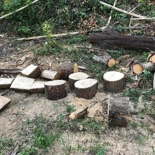伐採した木、差し上げます♪薪等にどうぞ!