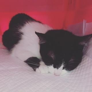 可愛い白黒猫です!2匹で飼いたい方も!