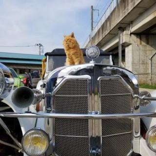 車が好きな人で集まりたいです‼️旧車、外車、カスタム、車に興味有る方‼️