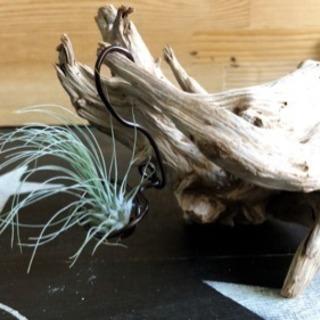 エアプランツ 流木 セット ハンドメイド リメイク 雑貨 観葉植物