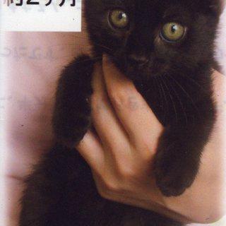 可愛い仔猫、里親さん募集中です。