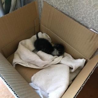 野良猫の親に捨てられた猫