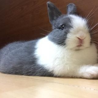 子ウサギです。